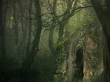 Mysterious Foggy Forest Escape