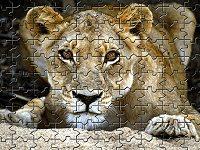 Wild Lion Jigsaw